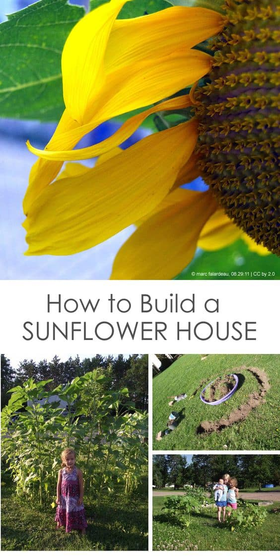 Gardening with Children: Create a Sunflower House for Kids *We are so making this sunflower fort!
