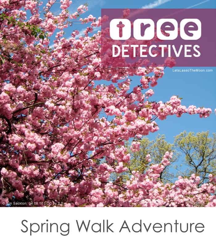 Tree Detectives *What a simple way to make an everyday walk FUN