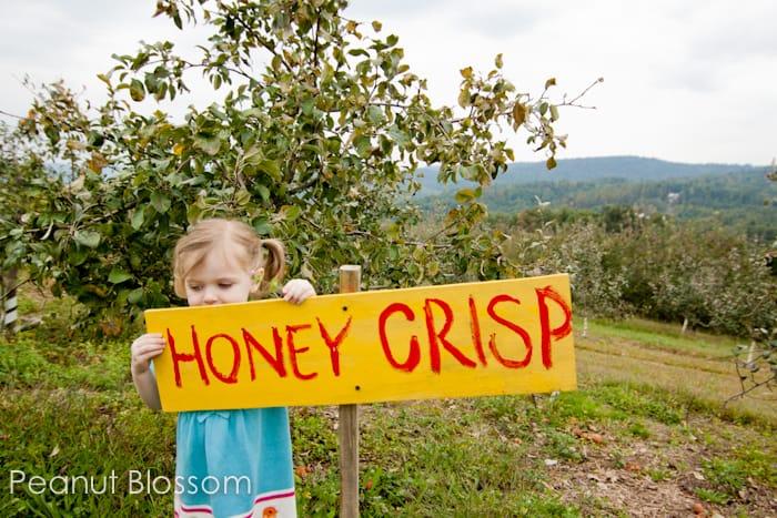 Top 5 Autumn Apple Recipes