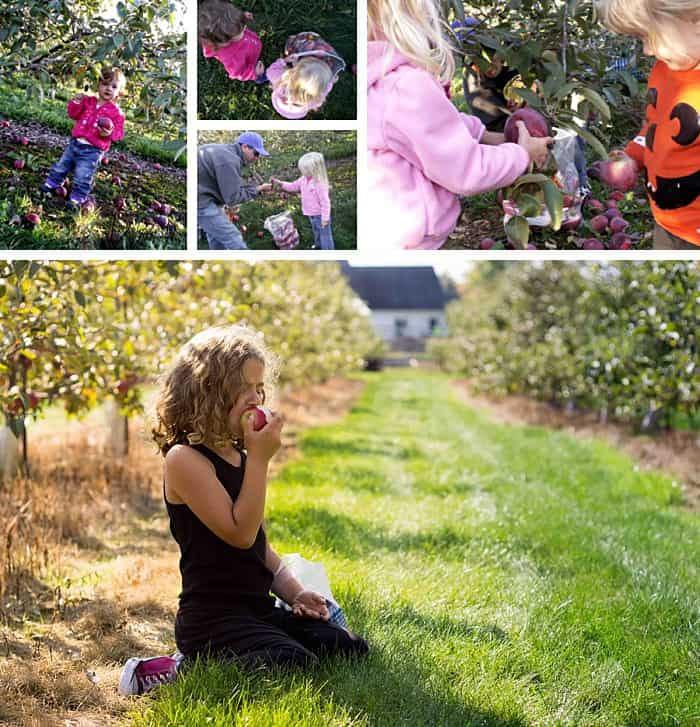 Colalge of photos of kids picking apples at an orchard.