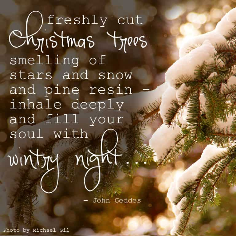 """...freshly cut Christmas trees smelling of stars and snow and pine resin - inhale deeply and fill your soul with wintry night..."" ― John Geddes, A Familiar Rain"