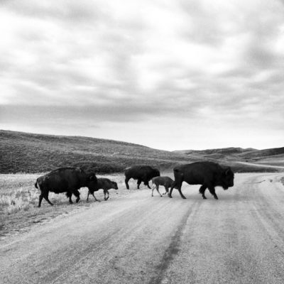 The Secrets of Custer State Park's Wildlife Loop — Black Hills National Park, South Dakota