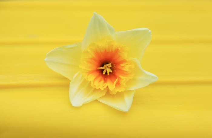 Educational Egg Carton Daffodils *So cute. Pinning this for later.