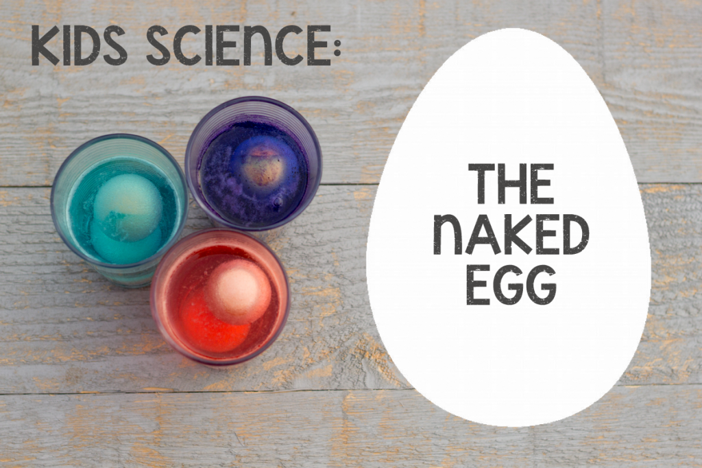 The Naked Egg Experiment: Simple science with Tinkerlab *This is crazy cool