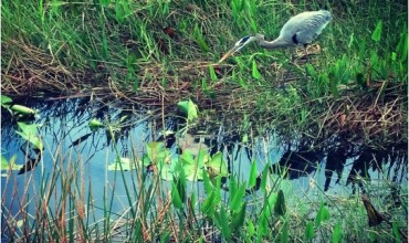 More Than Just A Swamp — Everglades National Park, Flordia