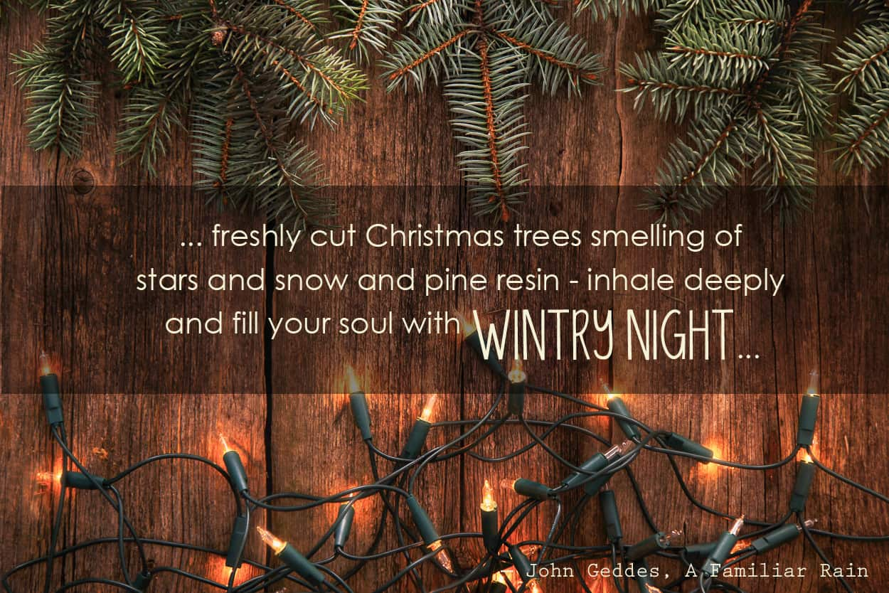 """""""…freshly cut Christmas trees smelling of stars and snow and pine resin – inhale deeply and fill your soul with wintry night…"""" ― John Geddes, A Familiar Rain #quote #christmas"""