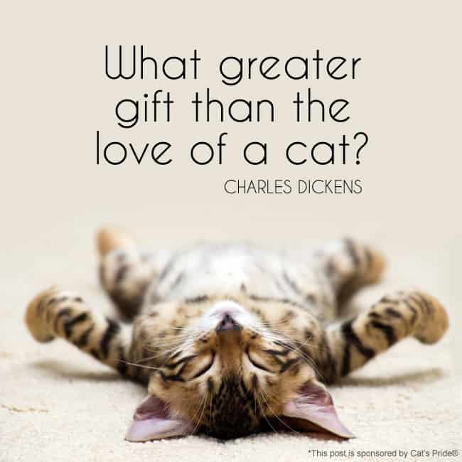 What greater gift than the love of a cat? — Charles Dickens #quote *So true