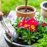 How-to-Plant-a-Honey-Bee-Garden-3