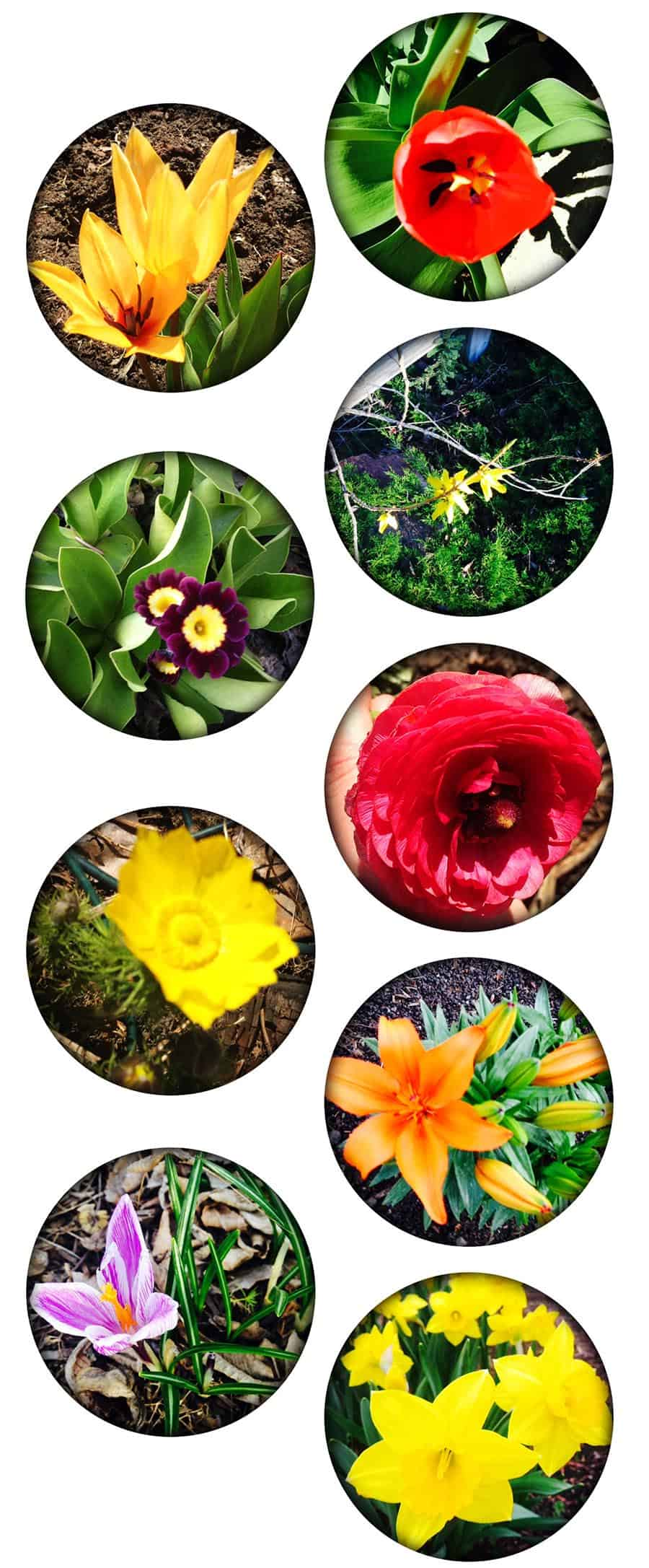 flowers_900