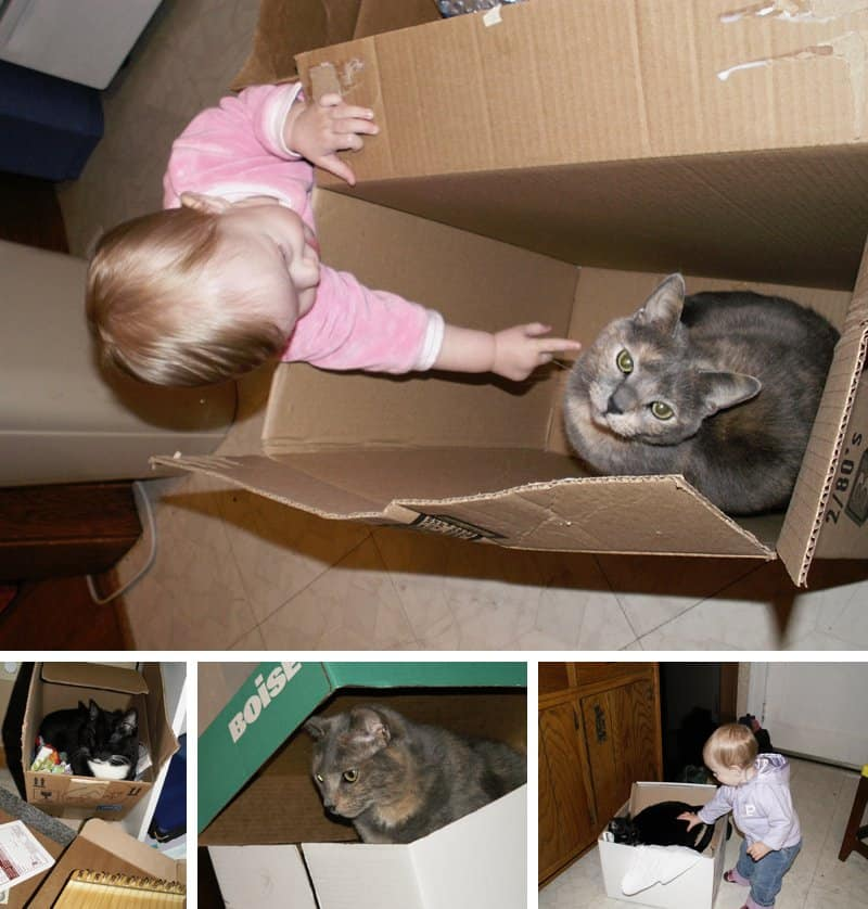 7 Astoundingly Helpful Tips for Moving With Cats