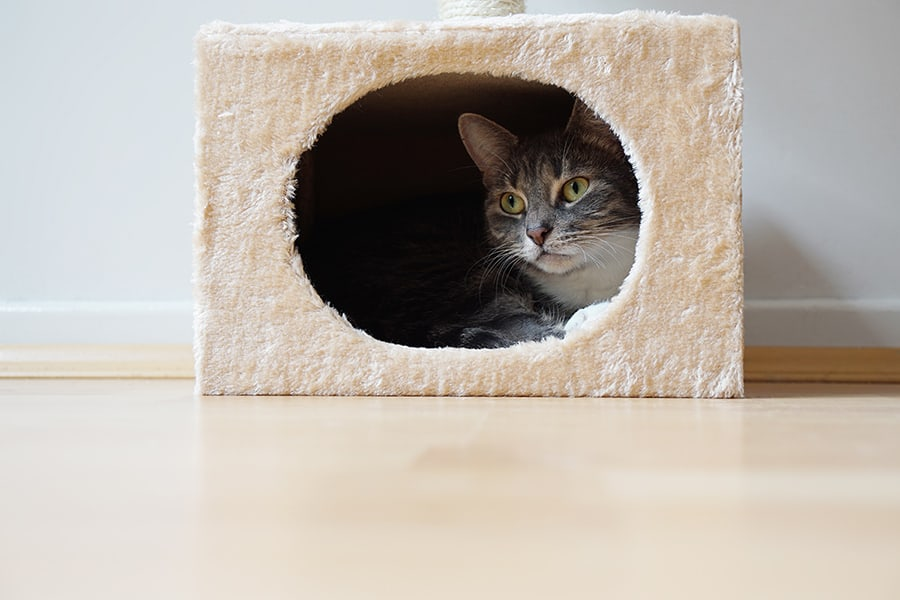 7 Astoundingly Helpful Tips for Moving With Cats into a New Home