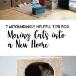 7 Astoundingly Helpful Tips for Moving Cats into a New Home *Great tips for transitioning your pets
