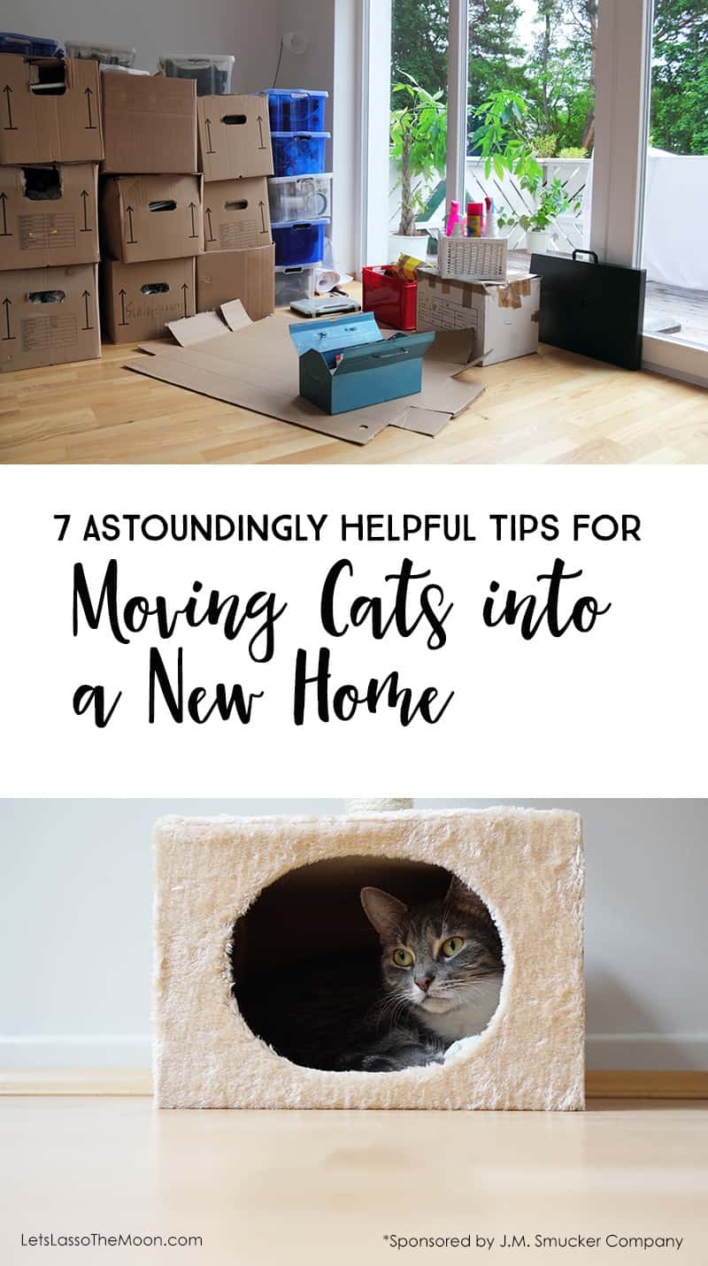 7 Astoundingly Helpful Tips for Moving With Cats Into a New Home *Great tips for transitioning your pets