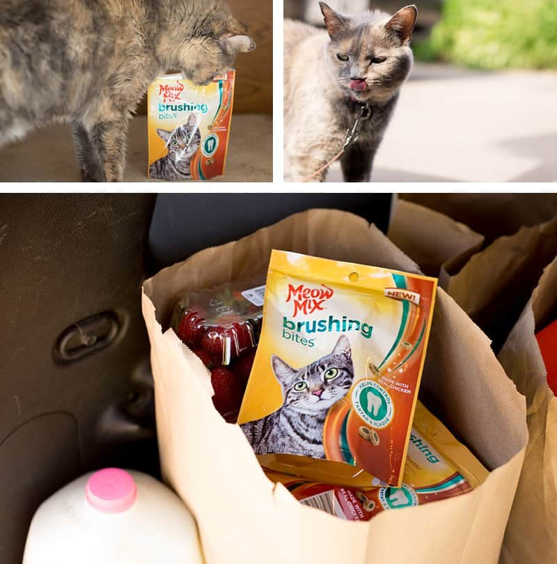 7 Astoundingly Helpful Tips for Moving With Cats *Great tips for transitioning your pets