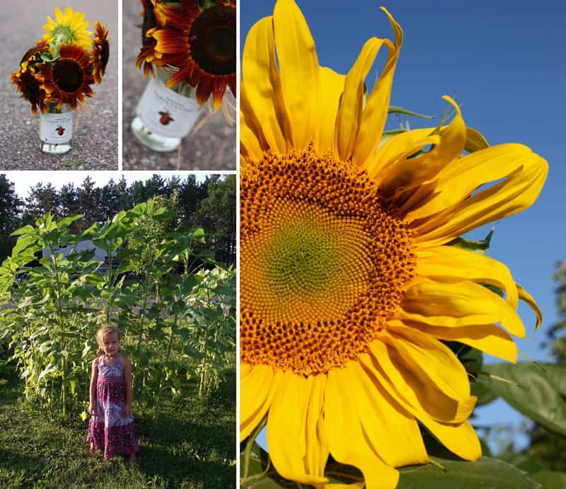 Get a bouquet of sunflowers - 20 Simple Things You Can Do Right Now to Make Yourself Happier *Loving this list