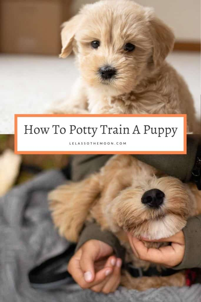 "A Goldendoodle puppy with text reading, ""How To Potty Train A Puppy."""