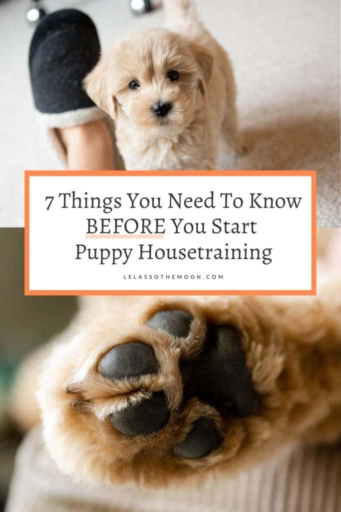 "A Goldendoodle puppy with text reading, ""7 Things You Need To Know BEFORE You Start Housetraining"""